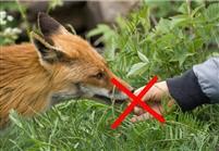 NATURE : Pas de chocolat pour les marmottes !