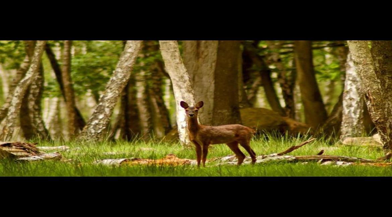 Une gestion plus écologique des forêts