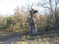 Pourquoi laisser le bois mort en forêt ?